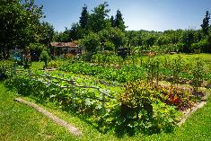 Jardins privés : INTERDICTION D'utiliser des pesticides chimiques